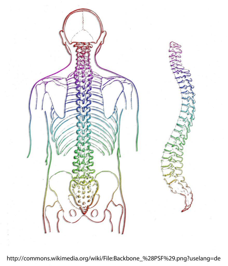 תרשים של עמוד שדרה